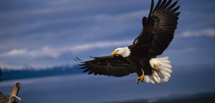 header-bald-eagle-nests.jpg